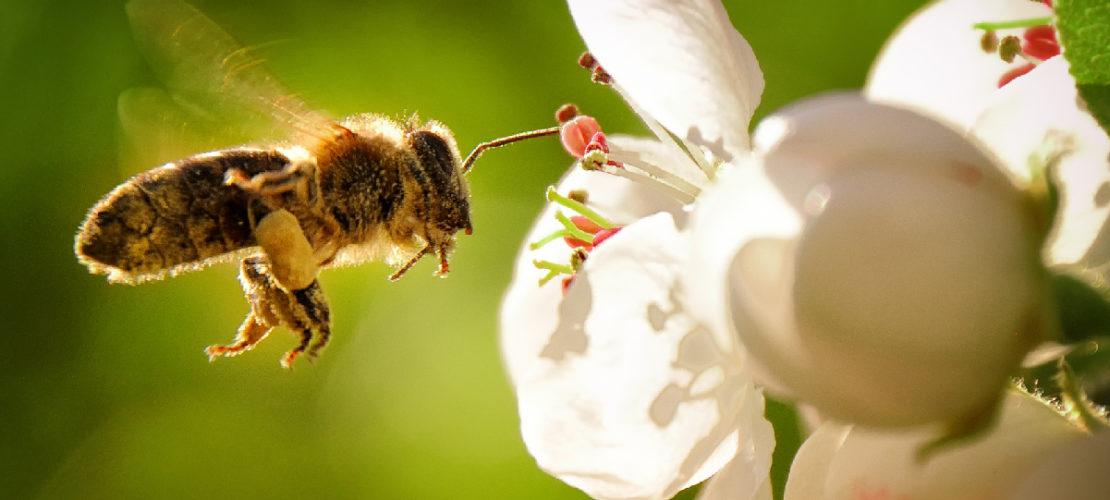 Invertire la rotta, oggi: l'imperativo della tutela della biodiversità