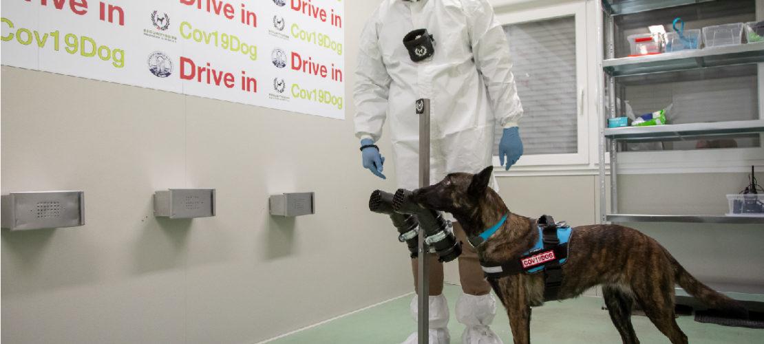 La promettente strada dei cani anti-Covid